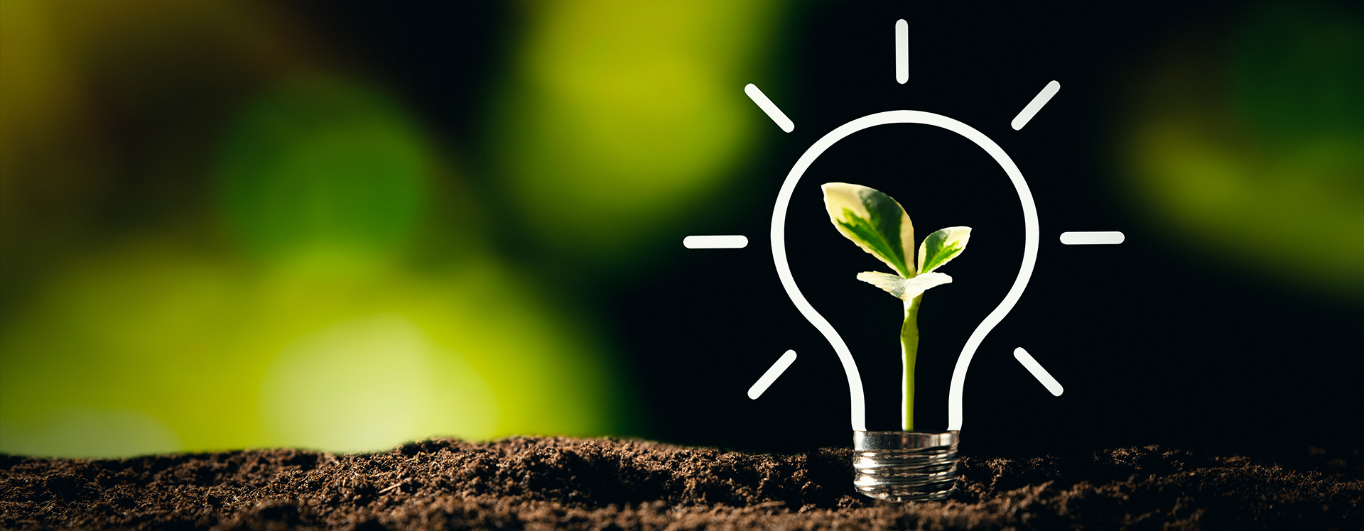 Sustainable Management Resources illustration of a sprouted plant growing within a lightbulb