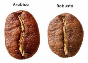 Shade-Grown Fair Trade Coffee